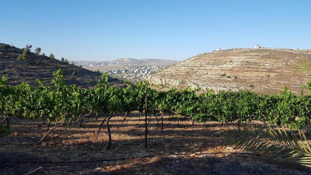 Beit El winery