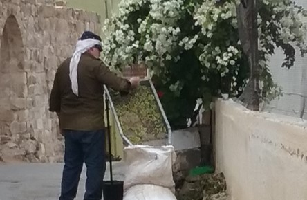 The first day of harvest, near Nablus. Photo: J. Quirk