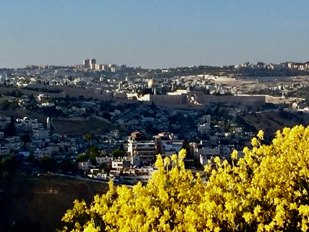 Springtime at the promenade of gold (Shira Pasternak Be'eri)
