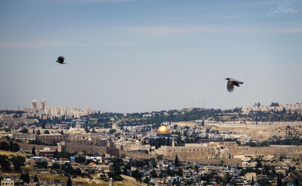 Birds in flight at the Tayelet (Courtesy: Laura Ben-David https://laurabendavid.smugmug.com/Portfolio/)
