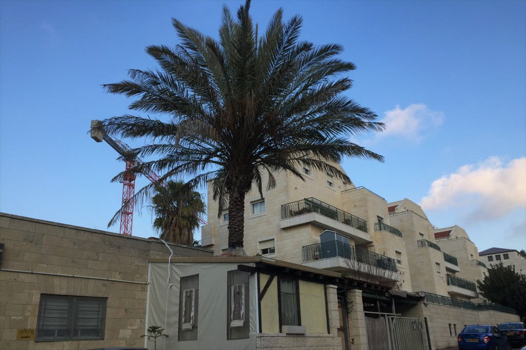 A palm tree grows through the roof of an enclosed porch on Reuven Street in Baka. Let us hope that this one is spared. (Photo: Shira Pasternak Be'eri)