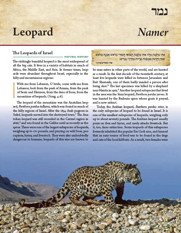 From the Torah Encyclopedia of the Animal Kingdom