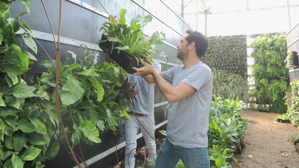 """GreenWall Israel workers install a vertical garden using plant """"blocks"""" in the office's greenhouse on March 23, 2016. (Melanie Lidman/Times of Israel)"""
