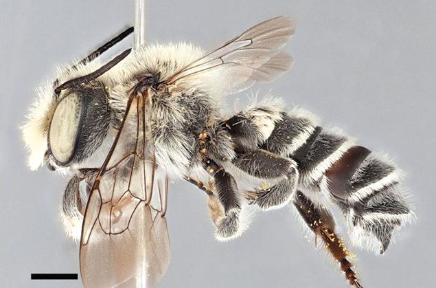 03-5-L-Chomsky-bee