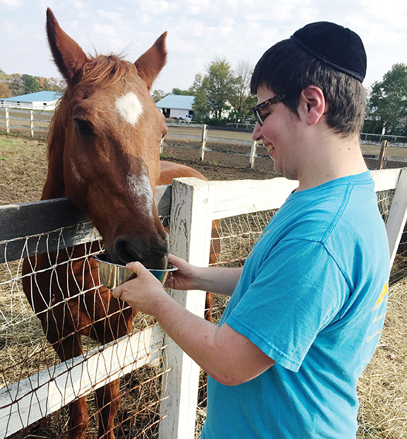 Moshe Rosenberg learns to groom a horse - and to read body language at the same time.