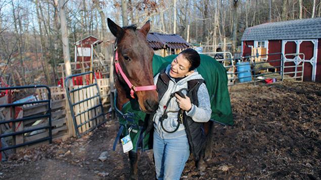 16-2-L-tevaland-taly-horse