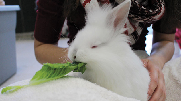 This bunny, Starry Night, lives at TevaLand.