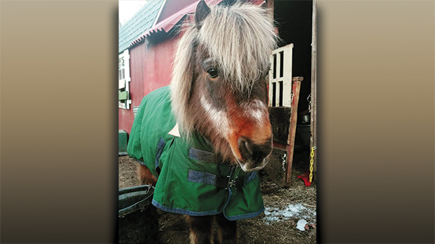 Tony the Mini Pony is keeping warm at TevaLand this winter thanks to a special donated blanket.