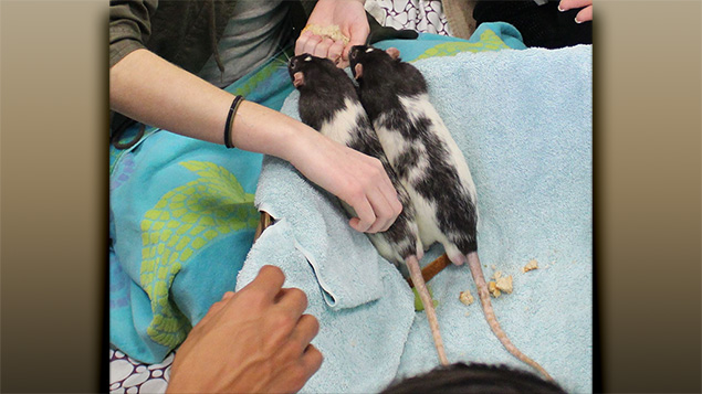 Formerly neglected rat brothers Rat and Touille visit schoolchildren with Taly & Friends to show how happy endings are possible if people care enough.