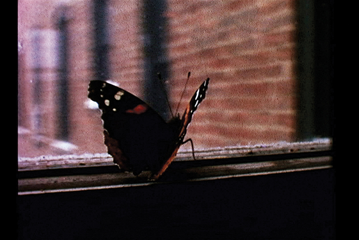 This butterfly is resting on the back window of the Leichters' Riverside Drive apartment. (Kirsten Johnson)